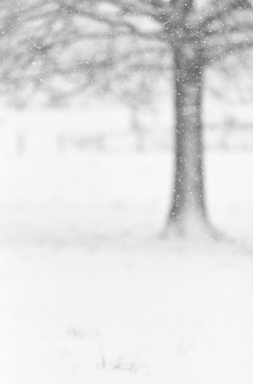 Folling snow with a tree in the background