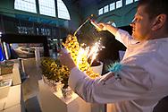 made in limburg live-foto's Joren De Weerdt-www.jorendeweerdt.com