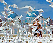 The famed white pigeons at the (Blue Mosque) Shrine of Hazrat Ali in Mazar-i-Sharif, Afghanistan, are fed by a visiting pilgrim.