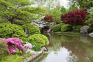 65021-03603 Bridge in Japanese Garden in spring, MO Botanical Gardens, St Louis, MO