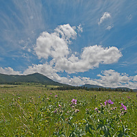 Wildflowers bloom in a meadow in Montana's Gallatin Valley.  Behind are Mount Ellis and the northern Gallatin Range.