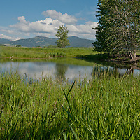 A small pond is encircled by pastures in Montana's Gallatin Valley, near Bozeman.  Behind is Mount Ellis and the northern Gallatin Range.