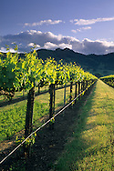 Sunset over hills and vineyard in spring, near Hopland, Mendocino County, California