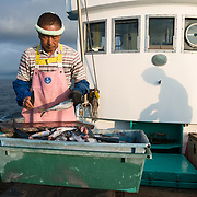 Hasegawa-san bathed in the warm light of sunrise while preparing bait for deep-sea fishing, the silhouette of his son working on the foredeck of the fishing vessel visible behind him,