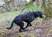 Toddington Manor / Herne Manor Farm Charity Working Test  31st March 2013