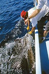 Fisherman With Sailfish