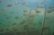 Fyke Nets, Underwater