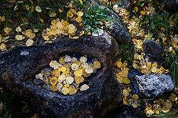 Fallen autumn aspen leaves and rock cistern along Elk Creek near Ash Mountain, Vermejo Park Ranch, New Mexico, USA.