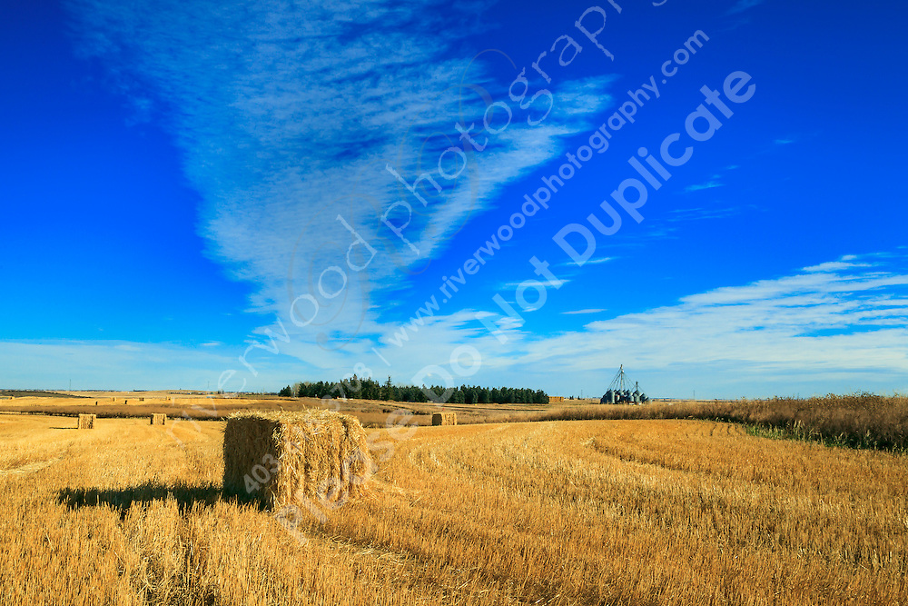 We took a trip out on to the prairies east of Calgary today to create our own family portrait. I didn't have a firm idea in mind other than I wanted to do something on the prairie, maybe making use of a big bale of hay, an old barn, or a grain bin. Something like that anway. So we drove around to see what we could find. It was a fun time and although the kids were pretty goofy we managed to get a few useable portraits. It's much harder to photograph my own family than it is to do other families!<br /> <br /> ©2011, Sean Phillips<br /> http://www.RiverwoodPhotography.com