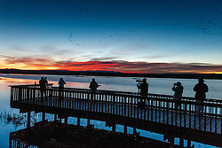 "Photographers and birders on  the ""Flight Deck"" wildlife viewing dock at sunrise, viewing snow geese in flight, Bosque del Apache, National Wildlife Refuge, New Mexico, USA."