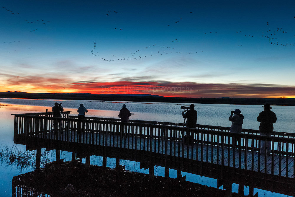 """Photographers and birders on  the """"Flight Deck"""" wildlife viewing dock at sunrise, viewing snow geese in flight, Bosque del Apache, National Wildlife Refuge, New Mexico, USA."""