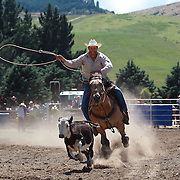 A cowboy in action during the Rope and Tie competition at the Millers Flat Rodeo. Otago, New Zealand. 26th December 2011