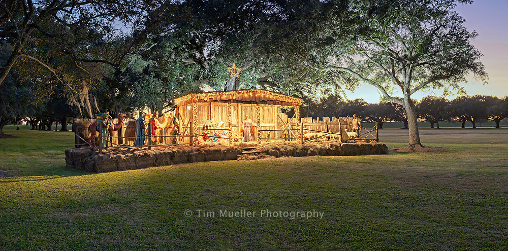 A nativity scene is set between the 100-plus year-old live  oaks of St. Joseph alley. The alley is located across River Road from the main building at Manresa House of Retreats.