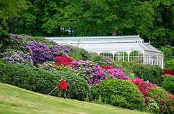 © Licensed to London News Pictures. 05/06/2019. Gardeners and volunteers prepare for the reopening of Wentworth Castle in South Yorkshire on Saturday. The gardens ,which include a Victorian glasshouse and folly, closed in 2017 but have been saved by the National Trust who have taken on a twenty five year lease. Photo credit: Scott Merrylees/LNP