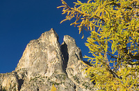 Early Winters Spires and Subalpine Larch (Larix lyallii) in autumn, North Cascades Washington