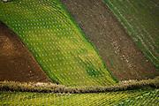 vineyards near Segesta