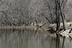 leafless trees in the springtime reflect off the water of a quiet running stream that they line.