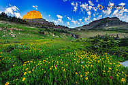 Alpine wildflower meadow at Logan Pass in Glacier National Park, Montana, USA