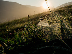 Scenic view of mountain with spider web on grass in the foreground, Black Forest, Yach, Elzach, Baden-Wuerttemberg, Germany