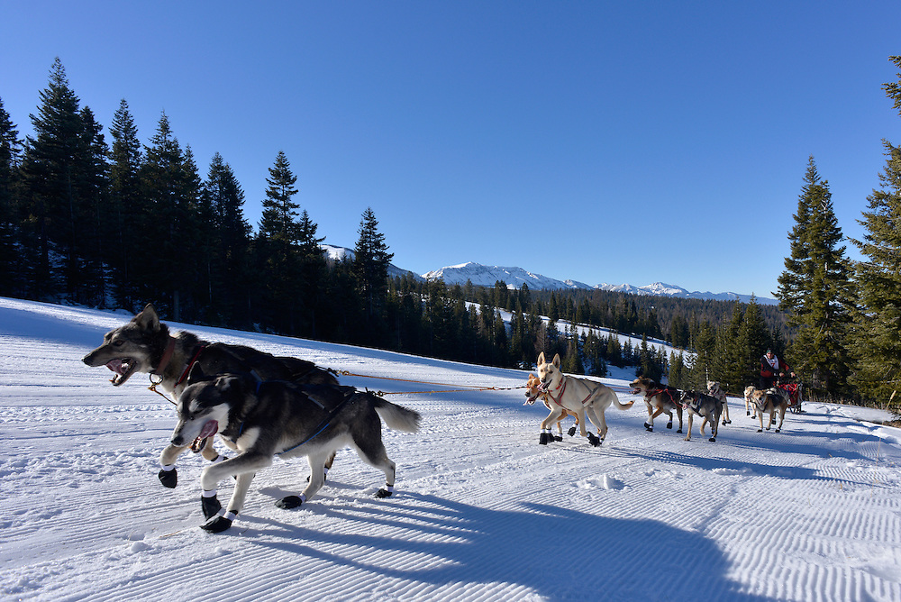 Musher and dog team ascending the first hill of the Eagle Cap Extreme dog sled race in Oregon's Wallowa Mountains.