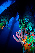 UNDERWATER MARINE LIFE CARIBBEAN, generic habitat pier pilings, sponge community