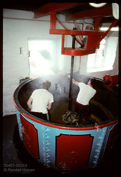 Workers shovel draff from mash tun out window for cattle feed at Edradour Distillery; Pitlochry. Scotland