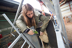 Anna with Kate Roswell at Hundleshope farm. Story on the farm in Peebleshire about the current state of women in farming. Giving the sheep a vitamin shot.