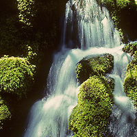 Mossy Stream near Fern Springs.