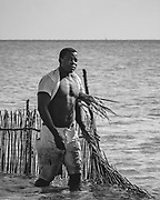 Mozambique fisherman near Vilankulos tending his tidal nets. The shallow waters between the mainland and Bazaruto archipelago are popular fishing grounds for crab and shellfish - the huge Mozambique prawns are not far away !