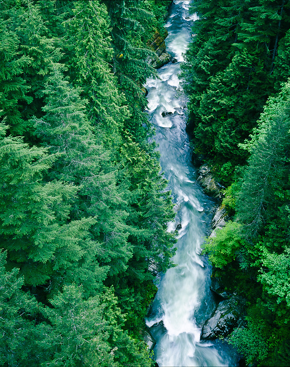 Carbon River, evergreen forest, Mt. Baker-Snoqualmie National Forest near the border of Mount Rainier National Park, Washington.  USA