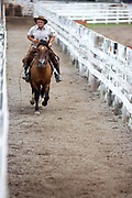 Brazilian gaucho cowboy riding a horse down the cattle run. Gaucho cowboy Rodeo, Flores de Cunha, Rio Grande do Sul.