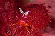 Nudibranchs of New Zealand.