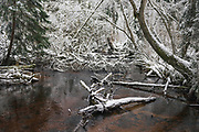 White winter day at Līgatne river, near Nītaure, Vidzeme, Latvia Ⓒ Davis Ulands   davisulands.com