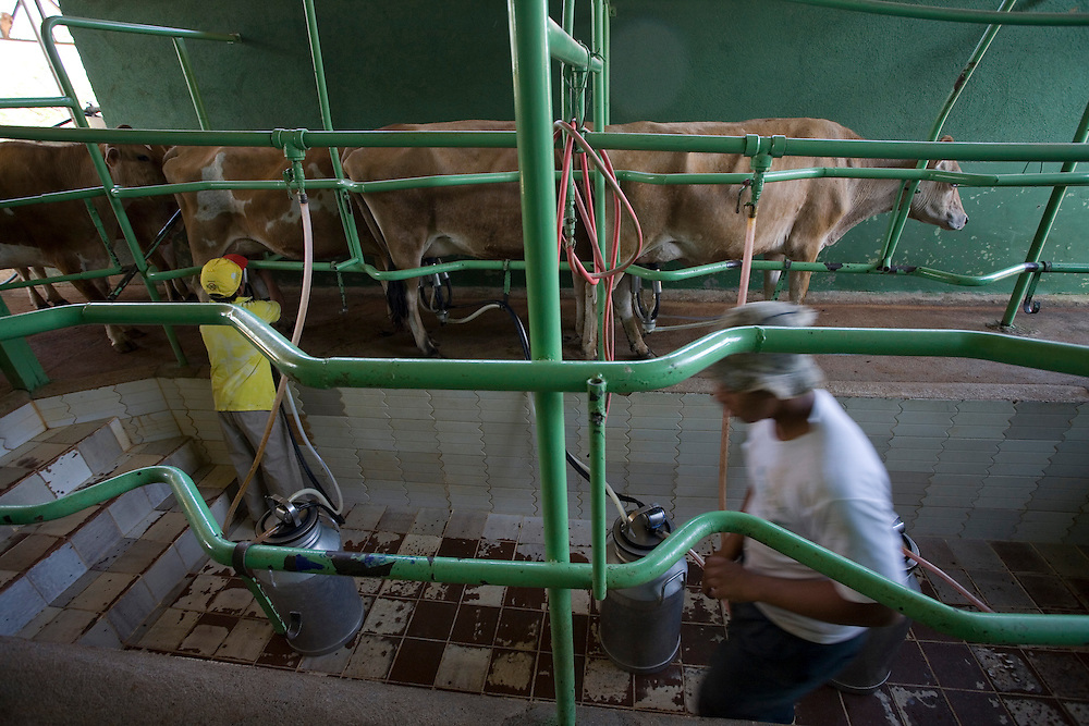 Esmeraldas_MG, Brasil...Ordenha Mecanizada em Bambui, Minas Gerais...Mechanical milking in Bambui, Minas Gerais...Foto: JOAO MARCOS ROSA / NITRO
