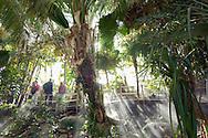PRT, Portugal: Oceanario de Lisboa, das zweitgroesste seiner Art weltweit,  Lebensraum Indischer Ozean, Dschungel der Küstenregionen, Lissabon, Lissabon | PRT, Portugal: Oceanario de Lisboa, the second largest world wide, habitat Indian Ocean, jungle of the coast area, Lisbon, Lisbon |