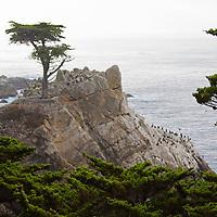 USA, California, Monterey. The Lone Cypress of Monterey.
