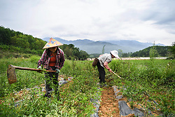 May 5, 2017 - Farmers weed farmland in Fanyang Township in Wuzhishan, south China's Hainan Province, the day marking ''lixia'', the beginning of summer, the 7th term of China's ''24 Solar Terms''. (Credit Image: © Shen Hong/Xinhua via ZUMA Wire)