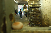 Hasan Saleh, in checkered shirt, takes chickens from their cages, weighs them and then kills them as Cristina Hernandez cuts them up to be given to vendors for their restaurants or homes at the Chicken Market on East 122nd Street in Manhattan, NY. 10/28/2005