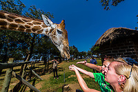 Giraffe with tourists, Lion Park, near Johannesburg, South Africa.