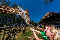 Giraffe with tourists, Lion Park, near Johannesburg, South Africa.