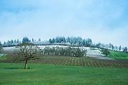 Stoller Vineyards in late spring