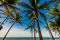 Palm trees line the beach at Hoi An Beach Resort, near Hoi An, Vietnam.
