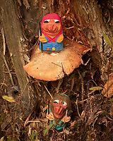 Mushroom Hunting Trolls found a Big One. Image taken with a Leica CL camera and 55-135 mm lens (ISO 1250, 135 mm, f/16, 1/250 sec).