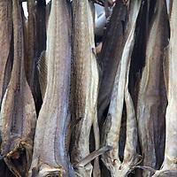 Europe, Norway, Alesund. Dried fish.