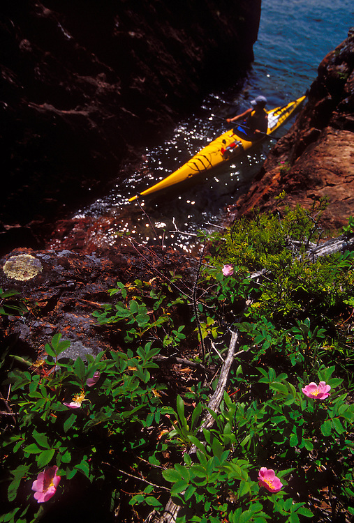 Wild roses bloom as a sea kayaker explores the rugged shoreline of Lake Superior on the Keweenaw Peninsula near Lac LaBelle, Mich.