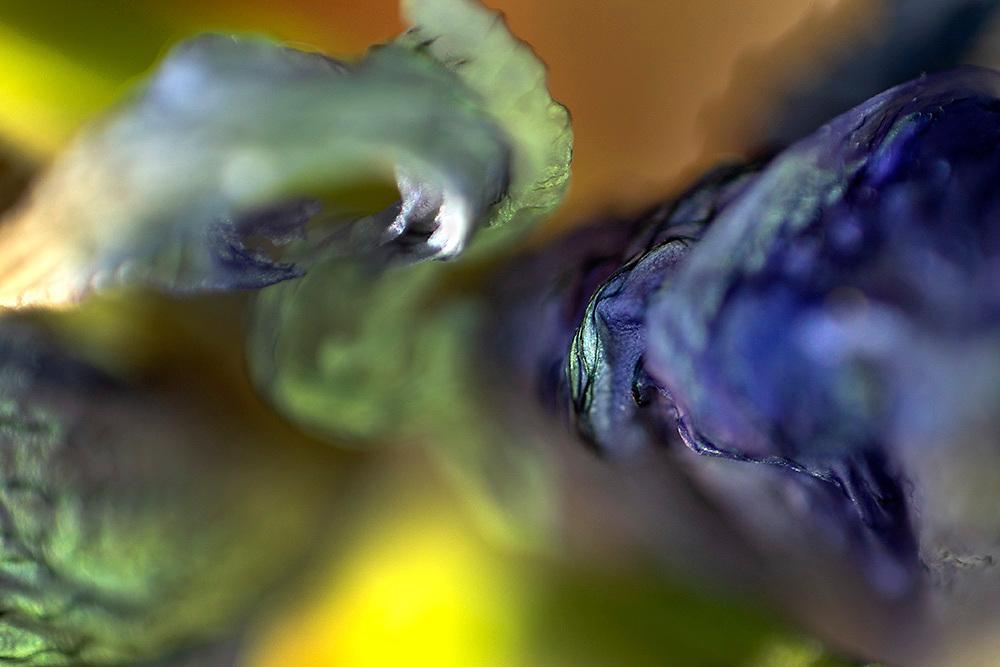 Fiore di Iris / Iris flower petals<br /> photo Antonietta Baldassarre