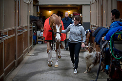 Guery Jerome, BEL, Grand Cru vd Rozenberg with his groom, <br /> Ecuries Jerome Guery - Sart-Dames-Avelines 2017
