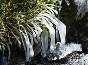 Ice encapsulated grass. Maroon-Snowmass Trail #1975, White River National Forest, near Aspen, Colorado, USA.