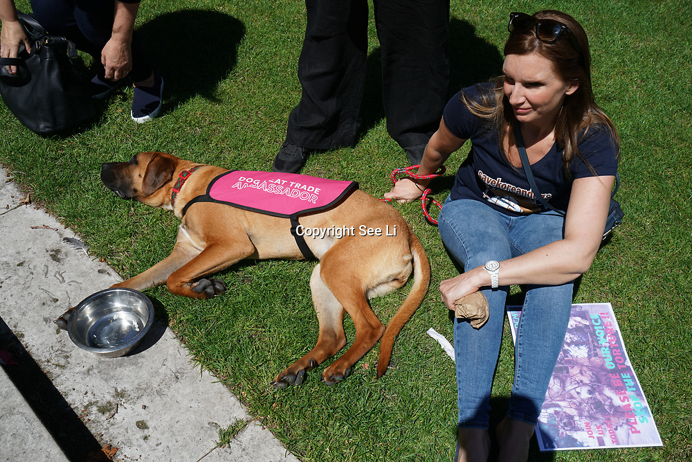 London,England,UK. 3rd June 2017. Animals animals activists , rallied at old palace yard demanding the end to the dog eating festivals and the dog meat trade on International Worldwide Awareness Day.  by See Li