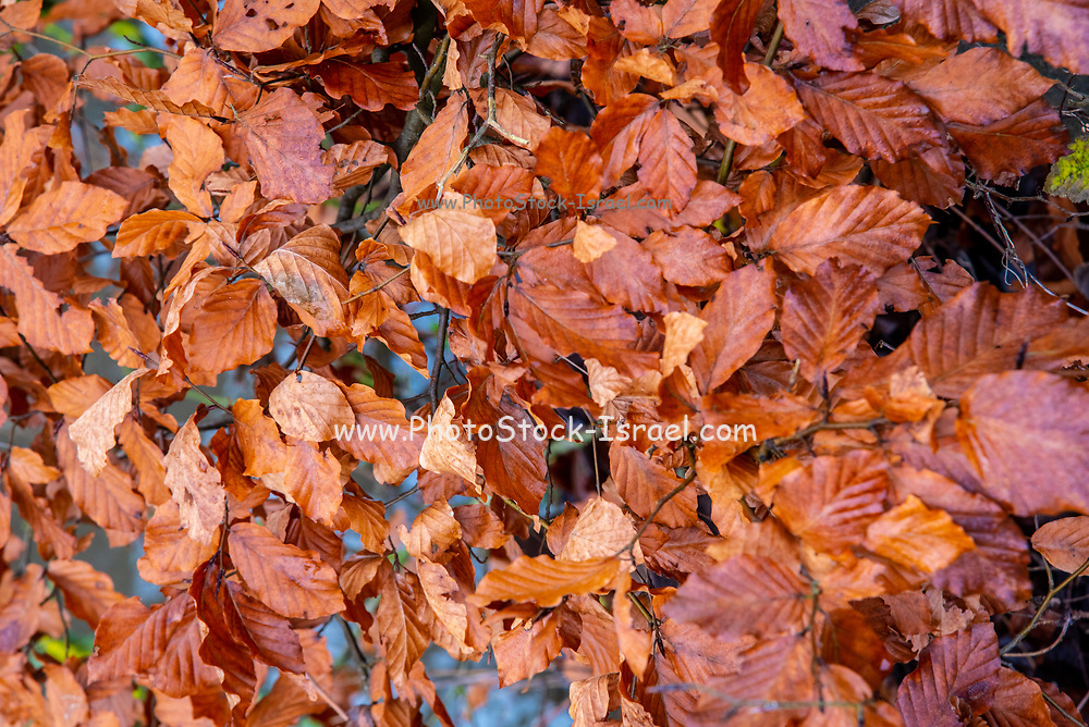Winter forest damp orange fall leafs on the ground. Photographed in Germany in January